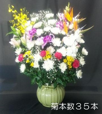 生花 菊本数35本
